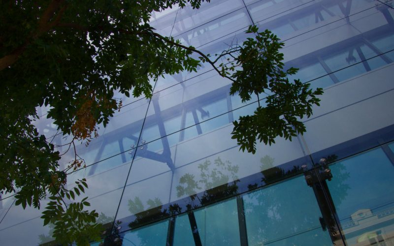 Tree branch reflected in glass building